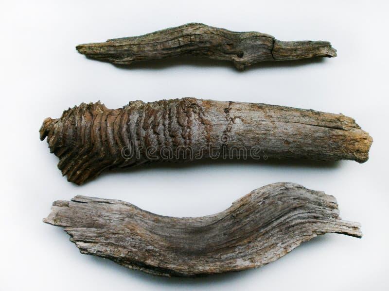 L'insieme delle cortecce del legname galleggiante si chiude su fotografia stock