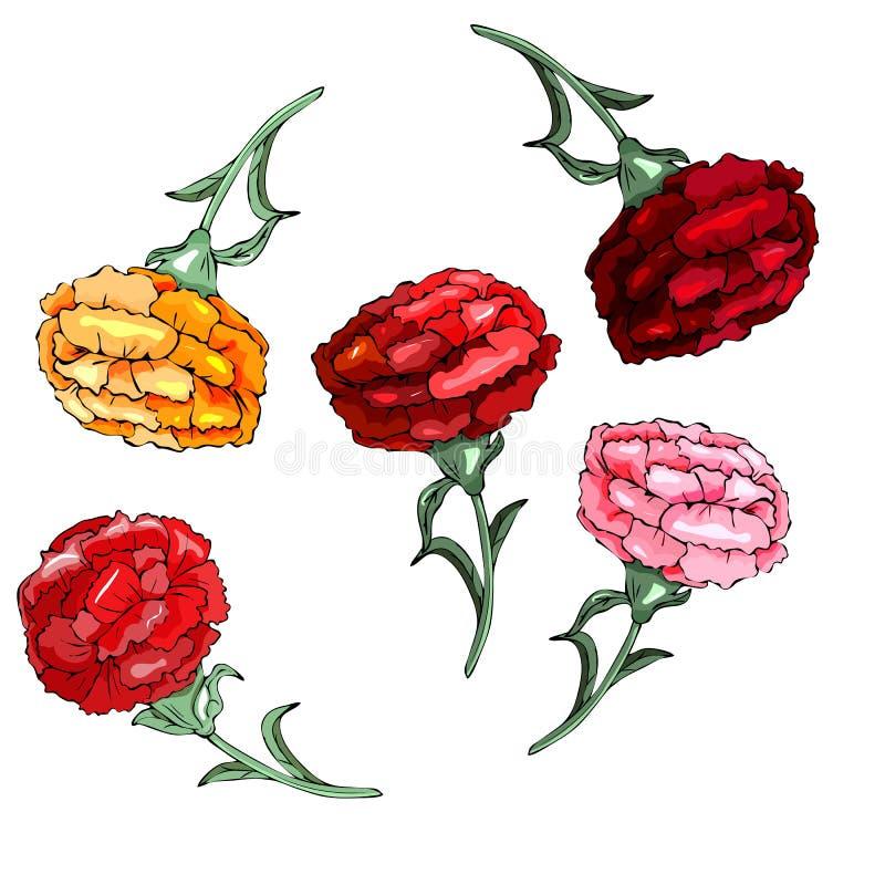 L'insieme dello schabaud del garofano, bianco, fiori rosa, gambi verdi, va su fondo bianco royalty illustrazione gratis