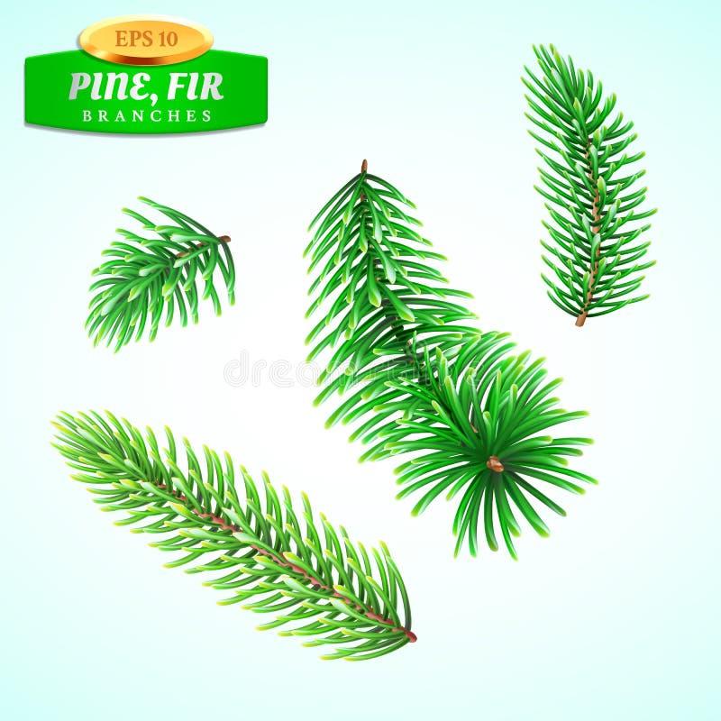 L'insieme di abete si ramifica, albero di Natale, pino Simbolo del Natale e del nuovo anno Decorazioni per le vacanze invernali illustrazione vettoriale