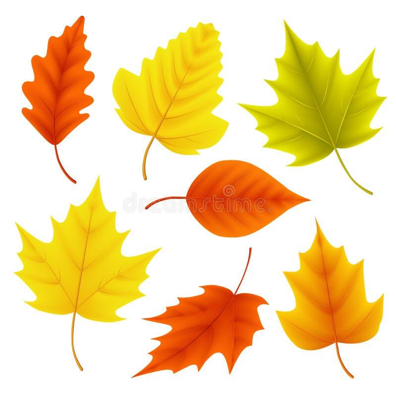 L'insieme di vettore delle foglie di autunno per gli elementi stagionali di caduta con l'acero e la quercia coprono di foglie illustrazione vettoriale
