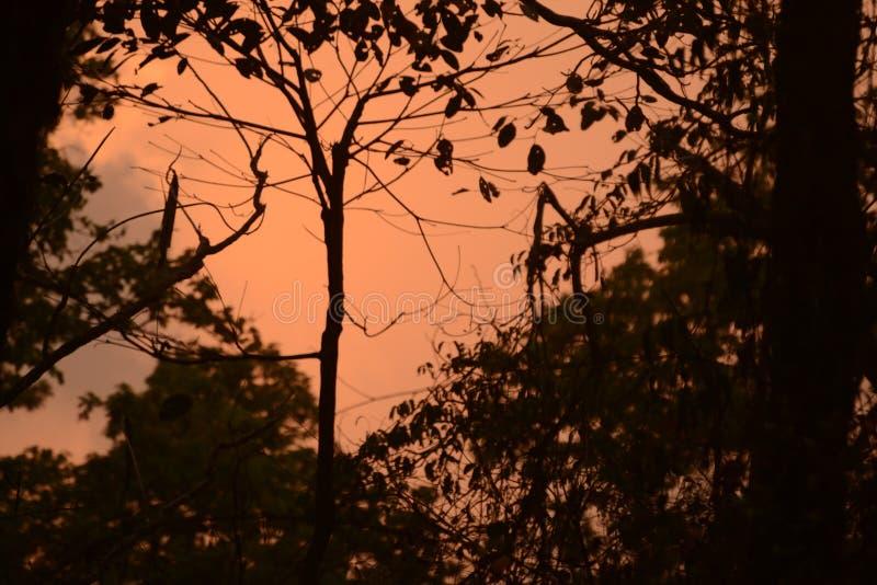 L'insieme selvaggio del sole, colourfull heven, si accende immagine stock