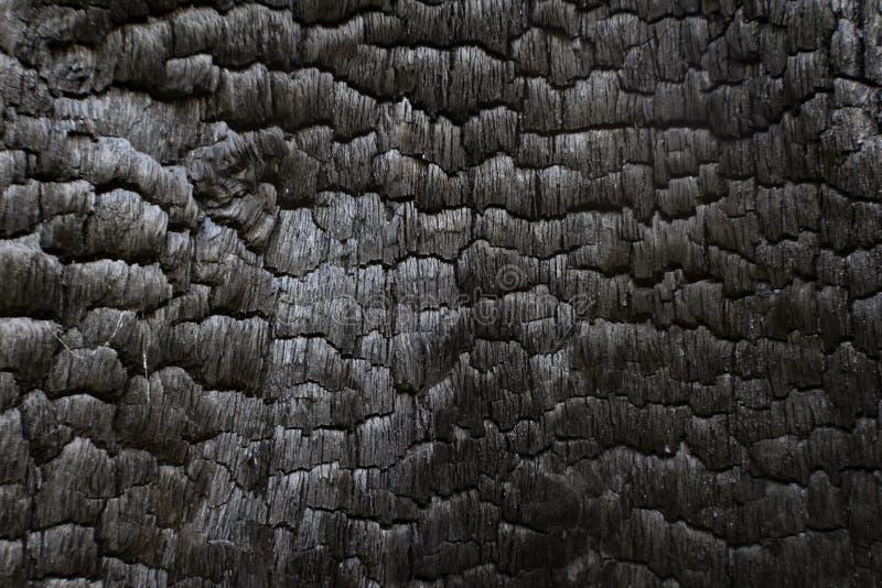 L'interno di legno nero carbonizzato del ceppo ha bruciato in un incendio forestale fotografia stock libera da diritti