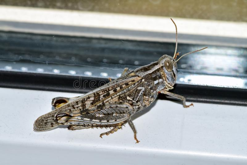 L'invasione della locusta, insetti invade la casa fotografia stock libera da diritti