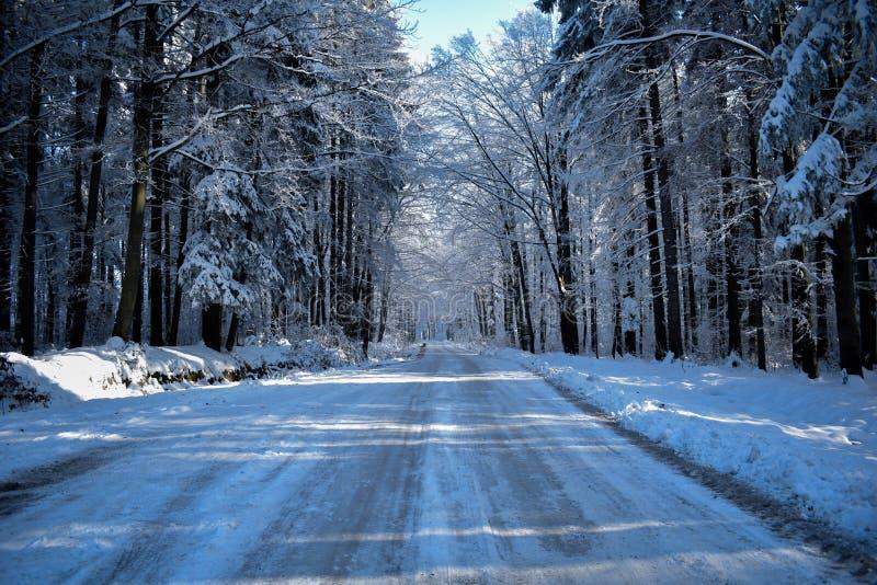 L'inverno è venuto immagine stock libera da diritti