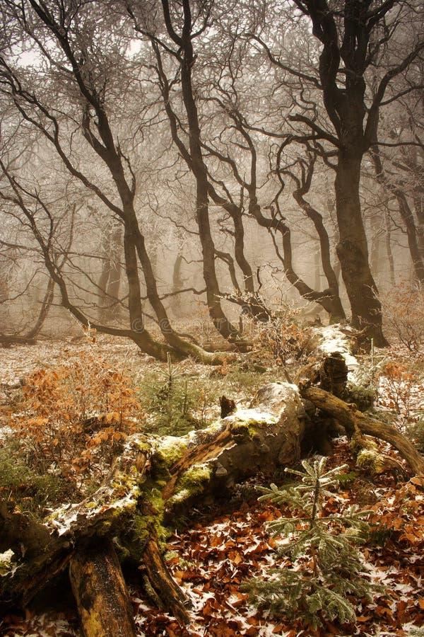 L'inverno comincia in foresta fotografie stock
