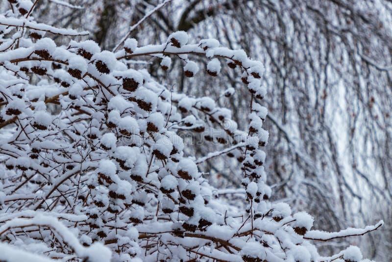 L'inverno negli aviatori polacchi parcheggia, Cracovia, Polonia immagini stock libere da diritti