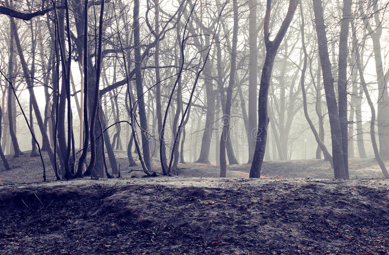 L'inverno Park City Zelenogradsk del deserto immagine stock