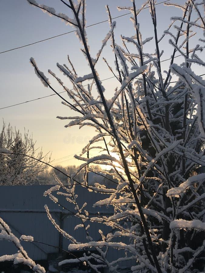 L'inverno sono venuto ed i rami di zaprosili fotografia stock