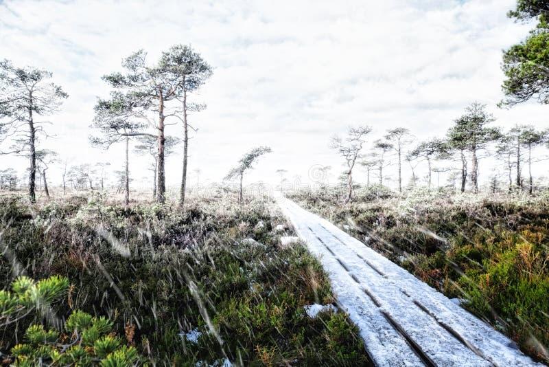 L'inverno sta venendo fotografia stock