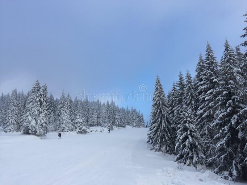 L'inverno ? una bella epoca dell'anno immagini stock