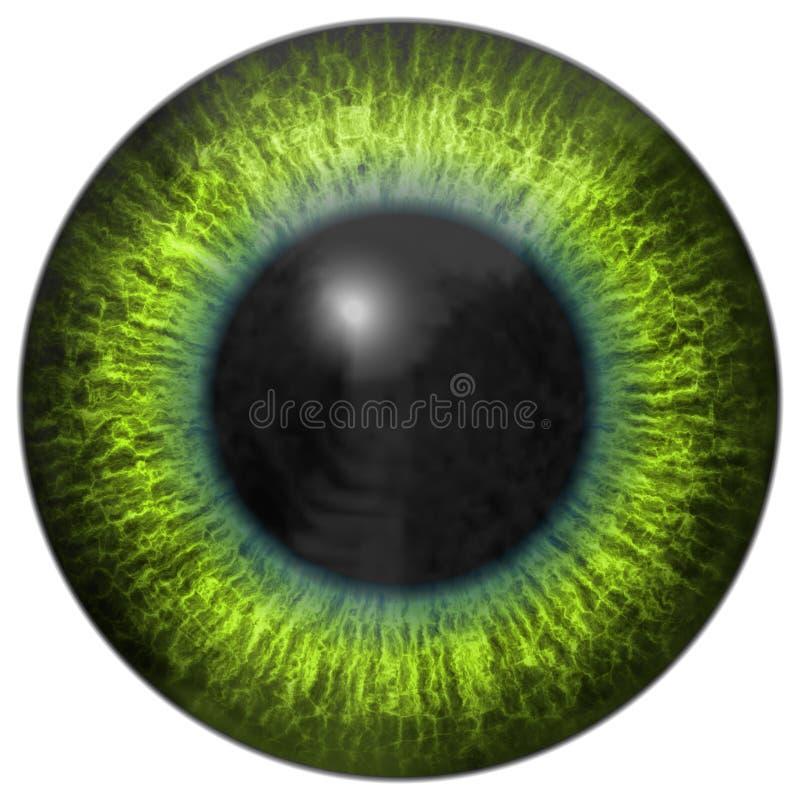 Download L'iris D'oeil Produit Loue La Texture Illustration Stock - Illustration du produit, vert: 45351911