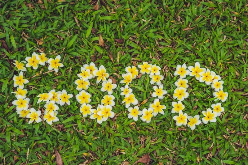 L'iscrizione di un buongiorno sull'erba Fiorisce il frangipani immagine stock