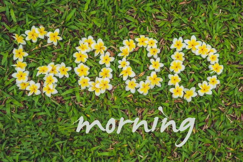 L'iscrizione di un buongiorno sull'erba Fiorisce il frangipani fotografie stock