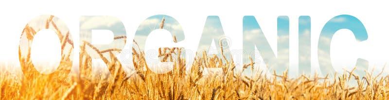 L'iscrizione organica sui precedenti di un campo della piantagione del grano Produzione dei prodotti agricoli organici fotografie stock libere da diritti
