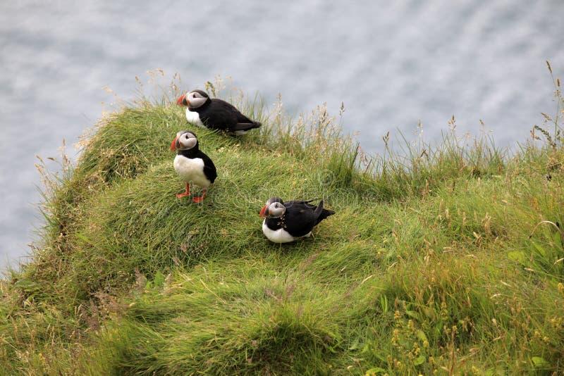 l'islande photographie stock libre de droits