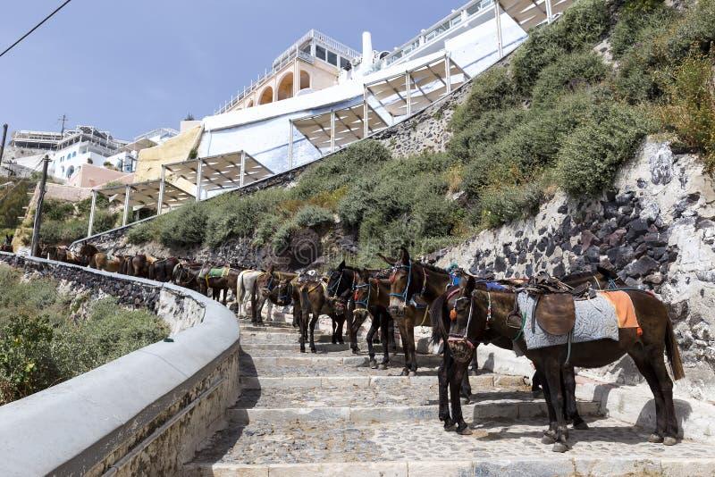 L'isola della Grecia Santorini negli asini di Cicladi delle isole è u immagini stock