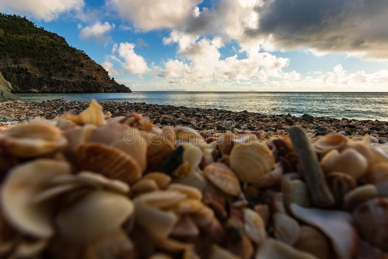 L'isola di St Bart dell'isola della st Barth, coperture caraibiche della foto del primo piano su Shell Beach in Gustavia, Antille fotografie stock
