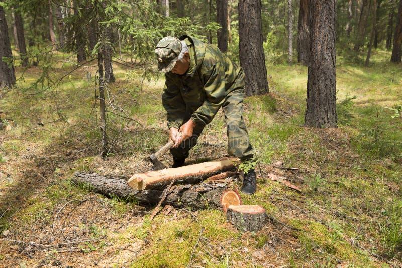 L'ispettore dell'ascia del ` s del carpentiere della foresta rimuove la corteccia da un albero in una radura della foresta immagine stock libera da diritti