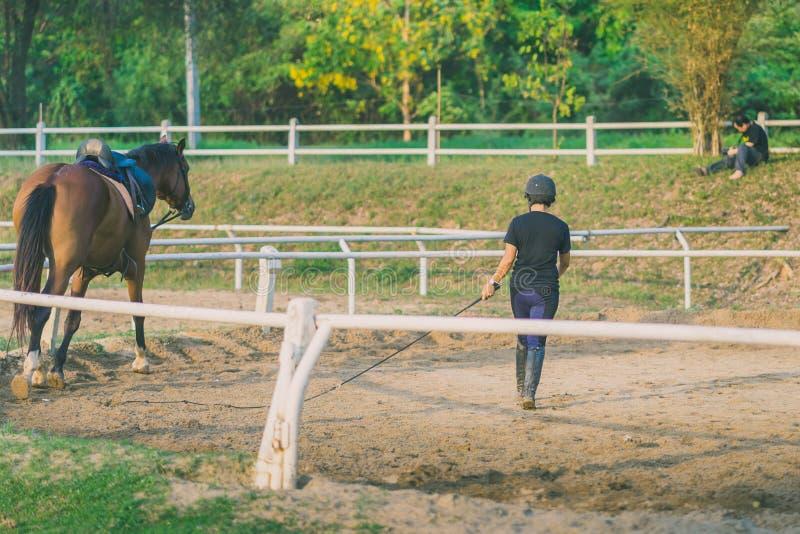 L'istruttore femminile sta preparando il giovane cavallo per l'addomesticato nella r immagini stock libere da diritti
