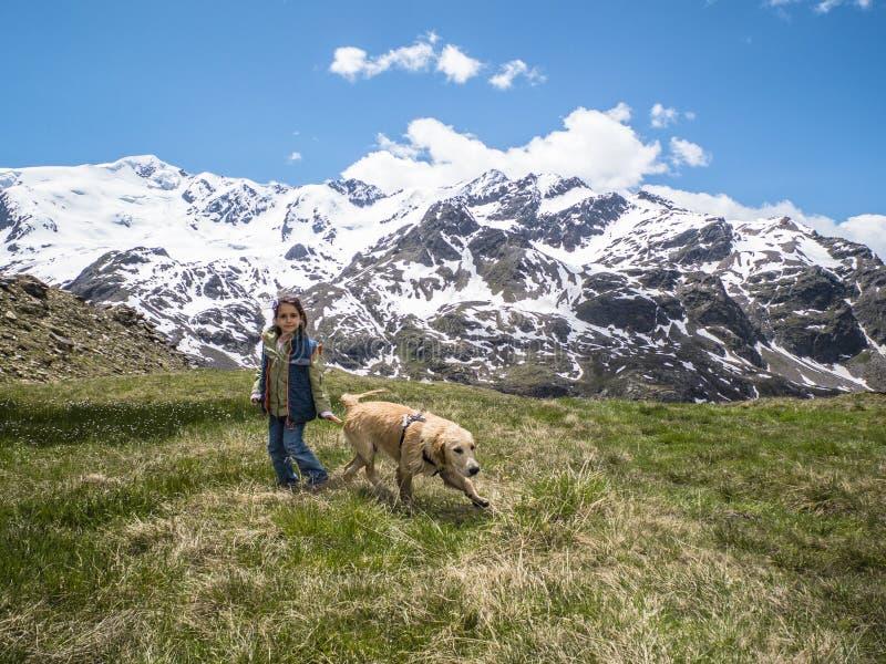 L'Italia, Lombardia, alpi, cucciolo di cane di golden retriever in montagna me immagini stock