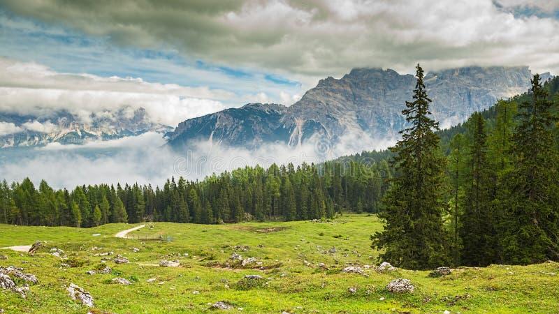 L'Italie, dolomites - un paysage merveilleux, pré parmi le pin photos libres de droits