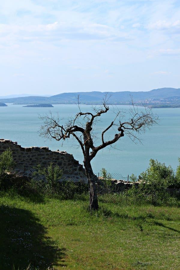 L'Italie, Ombrie : Arbre squelettique sur le lac Trasimeno photographie stock