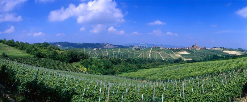 l'Italie - vignes photo stock
