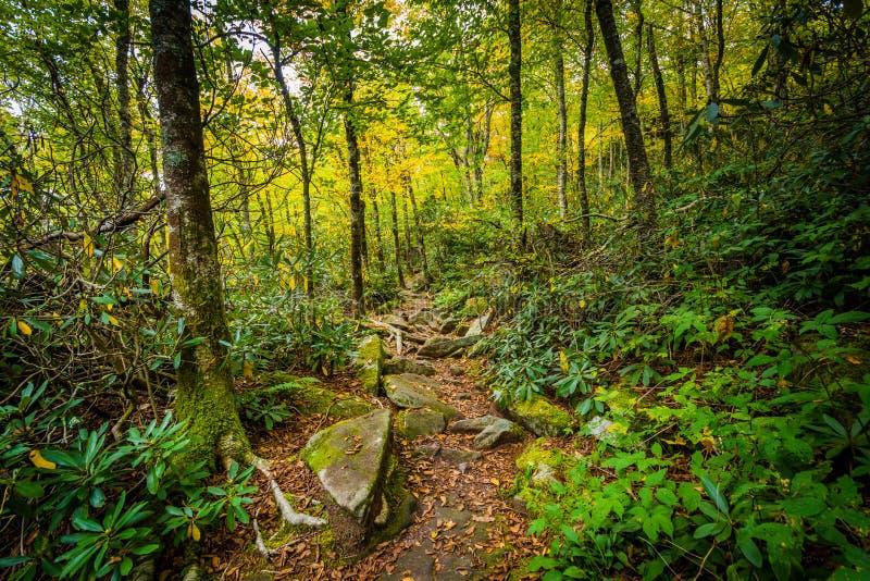 L'itinéraire aménagé pour amateurs de la nature noir de roche, à la montagne première génération, Caro du nord photo libre de droits