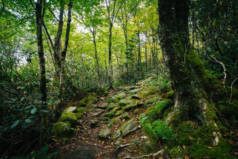 L'itinéraire aménagé pour amateurs de la nature noir de roche, à la montagne première génération, Caro du nord photos stock