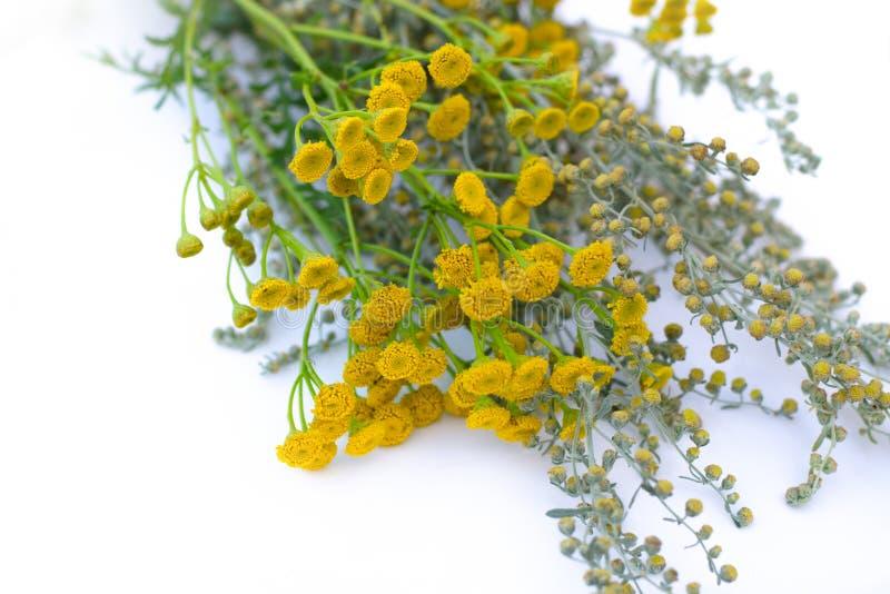 l?ka ?rtar Medicinalväxt- och blommabukett av malört, tansy E medicinal v?xt bakgrundsblurblomma inom som looks s royaltyfria foton