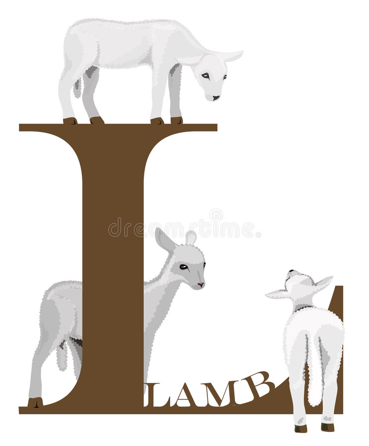 Download L (lamb) stock vector. Image of learn, child, isolated - 4240329