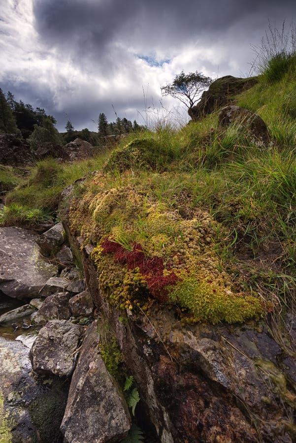 L'oasis du lichen, de la mousse et de l'herbe a couvert des roches d'andésite Rocher de château, secteur de lac, Cumbria photographie stock