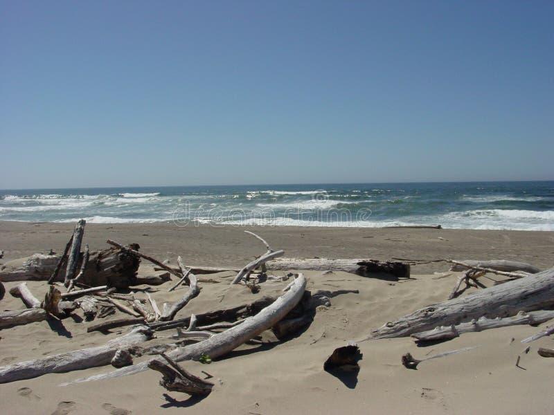 L'océan de la plage de bois de flottage photos libres de droits