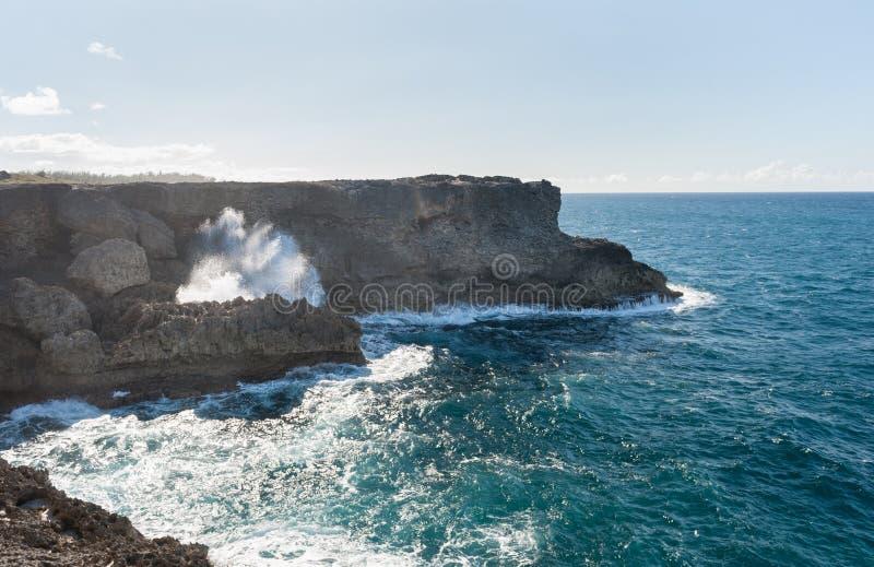 L'océan et les roches des Barbade à côté de la fleur animale foudroient l'Océan Atlantique Île de mer des Caraïbes photographie stock libre de droits