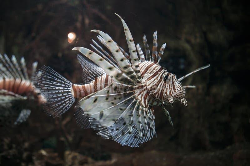 L'océan Poissons photos libres de droits