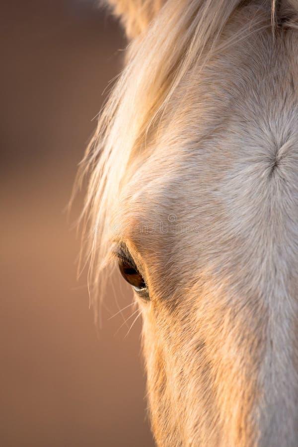 L'occhio del cavallo biondo fotografie stock libere da diritti