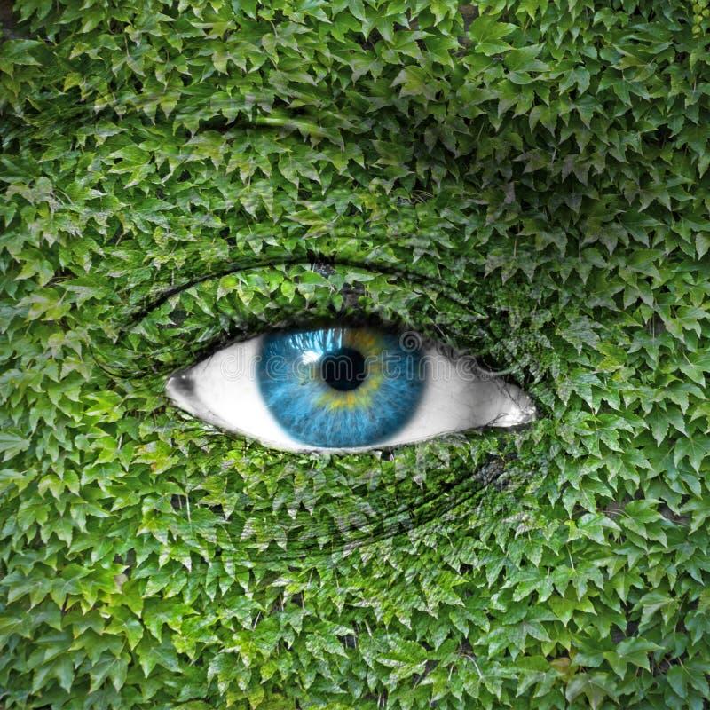 L'occhio umano e l'edera blu lascia - il concetto verde fotografia stock libera da diritti