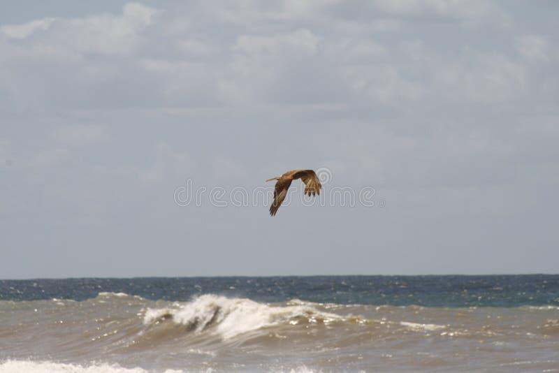 L'oceano e l'uccello immagine stock