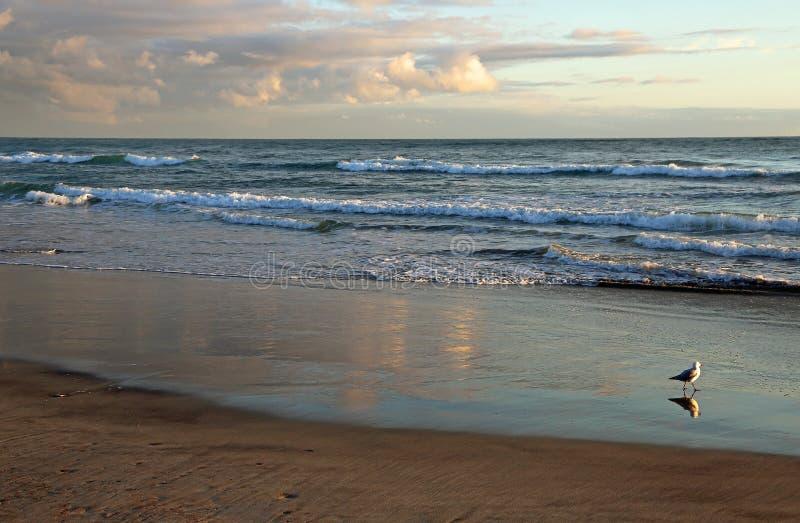 L'oceano ed il gabbiano fotografia stock