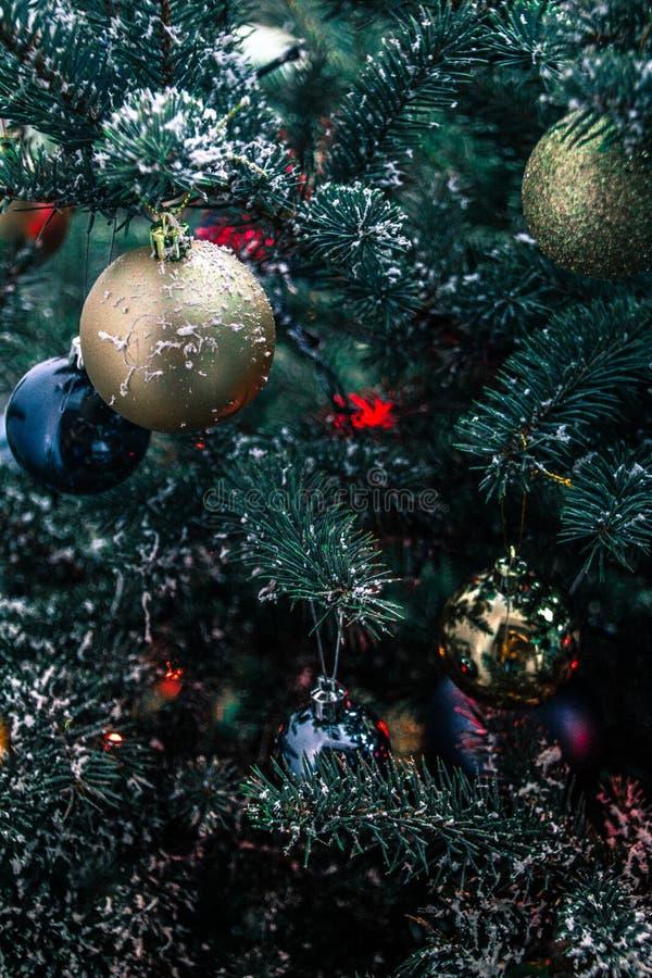 L'odore incantevole degli alberi di Natale immagini stock libere da diritti