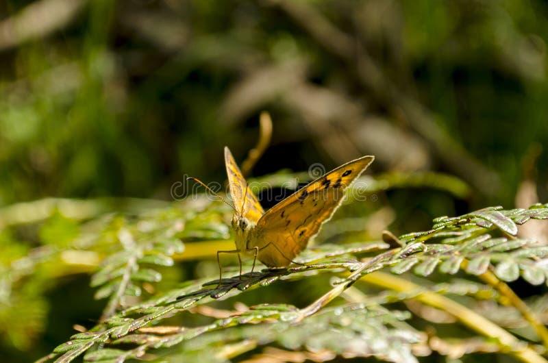 L'oeil d'un papillon image stock