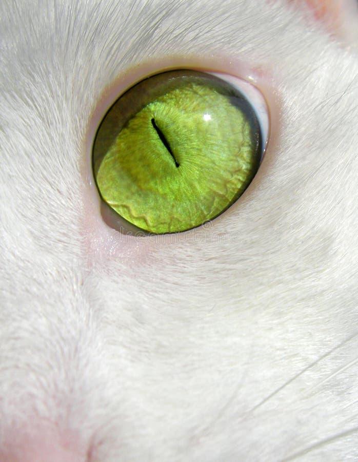 L'oeil vert du chat image libre de droits