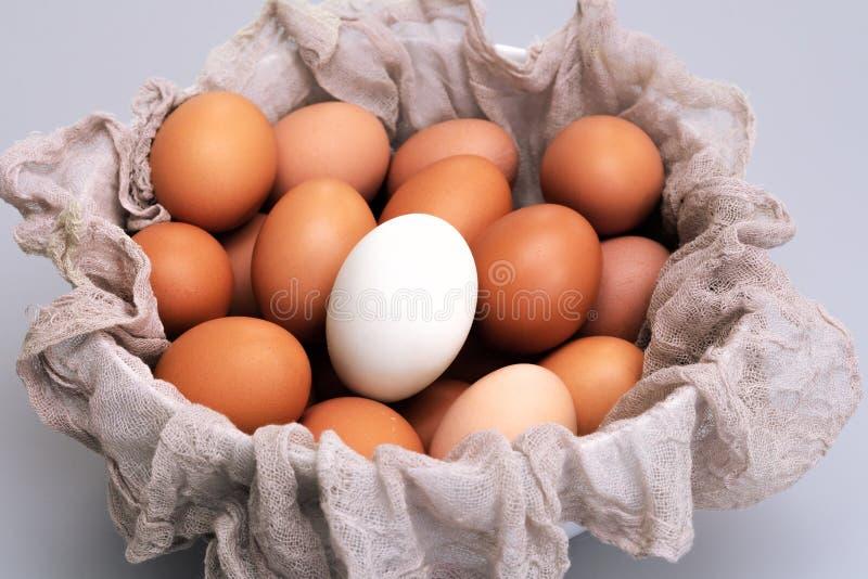 L'oeuf blanc en oeufs bruns de poulet roulent sur le concept gris de fond, de Pâques et de différence images libres de droits