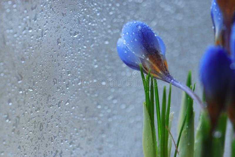 L'offerta fiori dspring immagini stock
