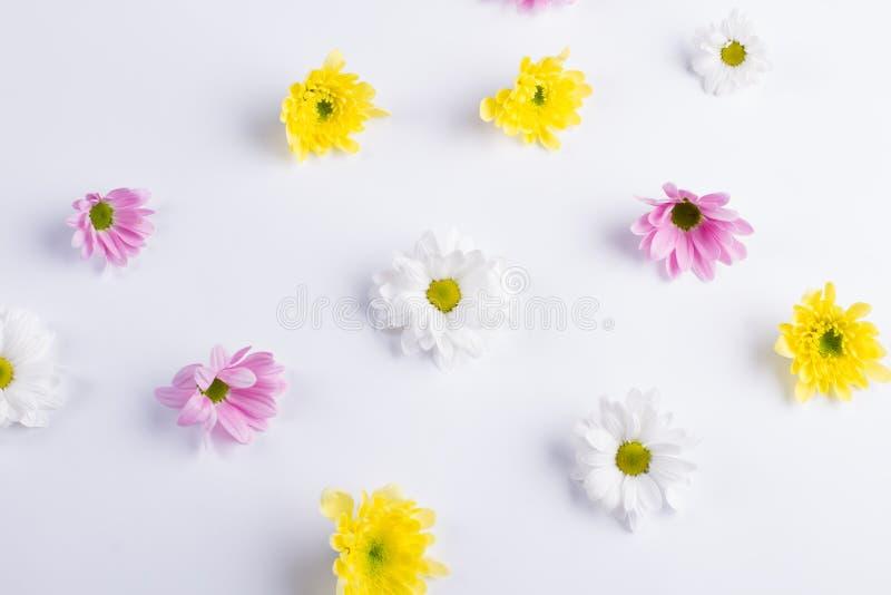 L'offerta fiorisce il fondo fotografie stock
