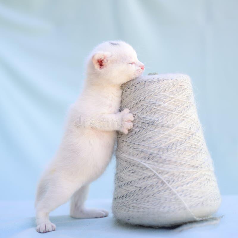 L'offre et le chaton blanc pelucheux joue avec une boule de l'histoire images stock