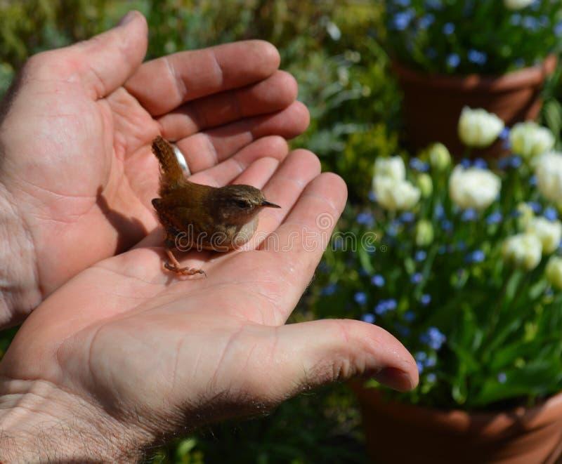L'oiseau dans la main vaut deux dans le buisson photographie stock