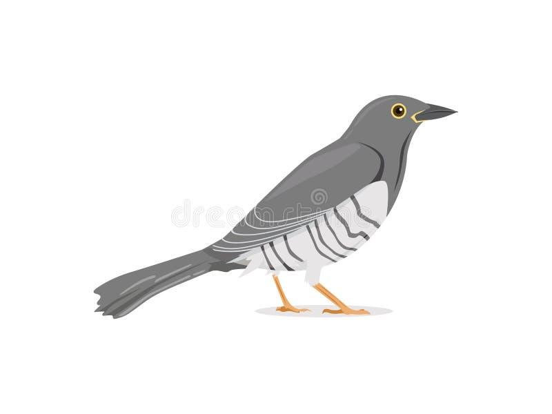 L'oiseau de coucou tiennent toujours l'illustration de vecteur illustration stock