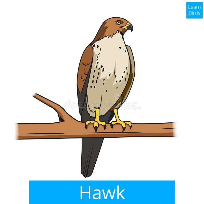L'oiseau de faucon apprennent le vecteur éducatif de jeu d'oiseaux illustration de vecteur