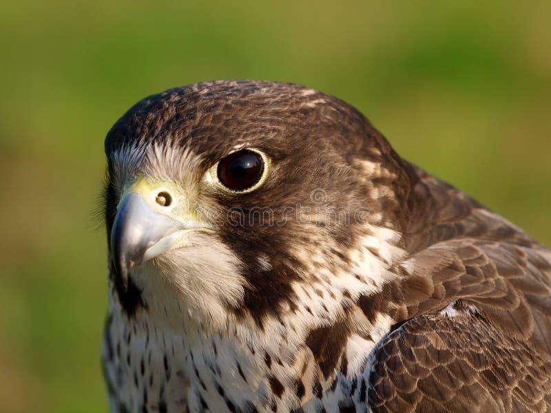 L'oiseau de prient photos libres de droits